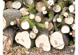 Baumstumpen & Wurzeln